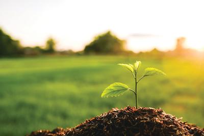 The Shifting Carbon Landscape